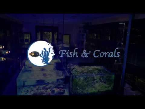 I nostri pesci marini 13/03/2020