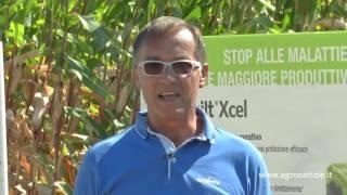 In difesa del mais - Mais Expert Campus Syngenta 2015