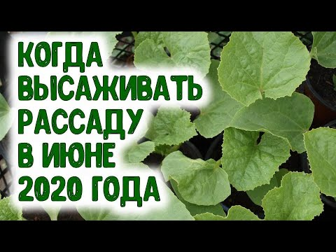 Вопрос: Когда сажать помидоры на рассаду по лунному календарю в 2020 году?