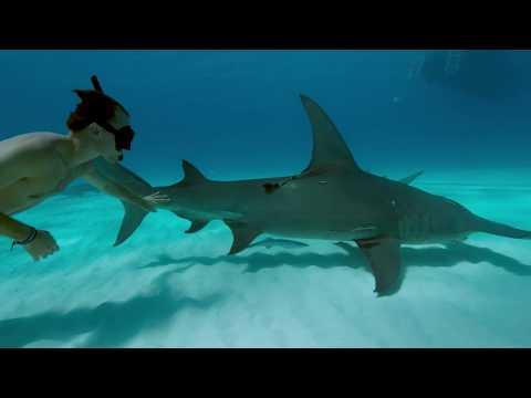 Sharkwater Extinction Trailer | 2019