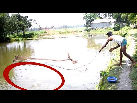 Traditional Cast Ruhe Fish | Net Fishing  In Village Pond | P-61