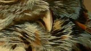 Wildlife Art; Owl Painting - Watercolor Wildlife Art in Miniature