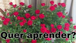 Como Fazer sua Mini Rosa Explodir de Floração