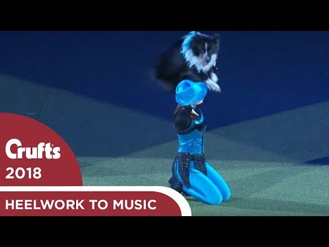Heelwork to Music - Freestyle International Winner | Crufts 2018