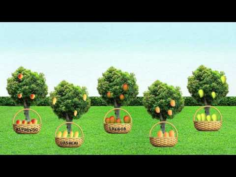 Types of Equity Mutual Funds : Part 2 - Franklin Templeton India