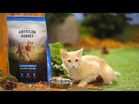 American Journey Grain-Free Cat Food | Chewy