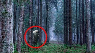 Most MYSTERIOUS Places You Might Find Bigfoot!