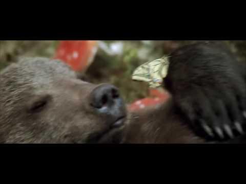 медведь и грибы