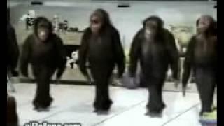 Клип пародия на песню Арсена Петросова