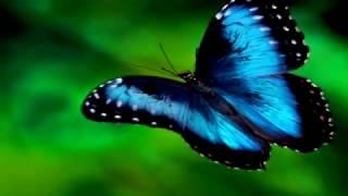 Download Бабочка  Музыка Сергея Чекалина. Butterfly. Music of Sergei Chekalin. Mp3 and Videos