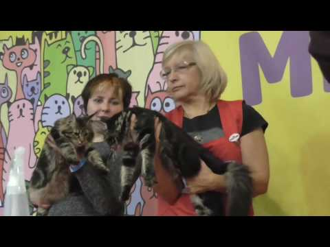 CATS WORLD 2016. Maine Coon Breed Show
