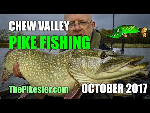 Chew Valley Lake Pike Fishing October 2017