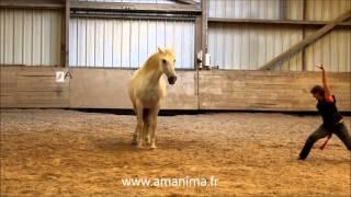 Tai chi chuan et cheval (immobilité) : l'éventail