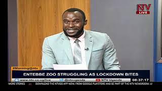 ON THE GROUND: Entebbe zoo struggles to take care of chimpanzees as lock down bites