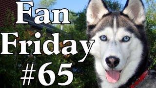 Are Siberian Huskies Good Family Dogs?  Fan Friday #65