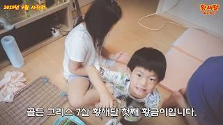 [육지거북] 골든그리스 황금9월 사진전