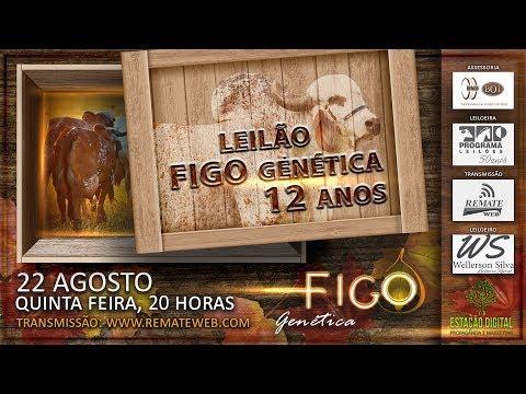 VÍDEO 01 - RESUMO LOTES 07, 20, 19, 04, 13, E 18 DO LEILÃO FIGO GENÉTICA 12 ANOS.