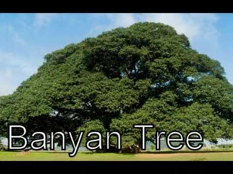 Types Of Plants Various Trees Diffe And