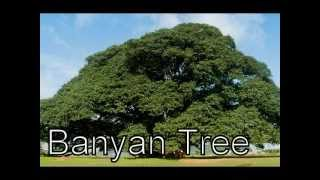 Types Of Plants, Various types of trees, different types of plants and trees