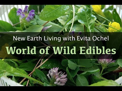 Enter the World of Wild Edibles [New Earth Living ep. 9]