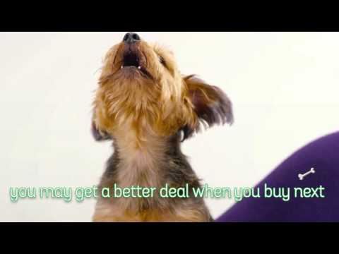We Buy Any Car Christmas Singing Dogs