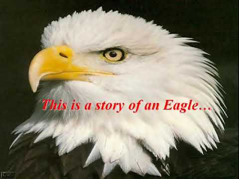 Motivational - Rebirth of an Eagle