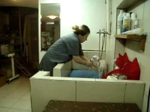 pet club athens grooming dog