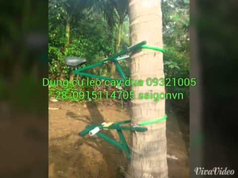 thiết bị leo cây dừa bến tre độc đáo