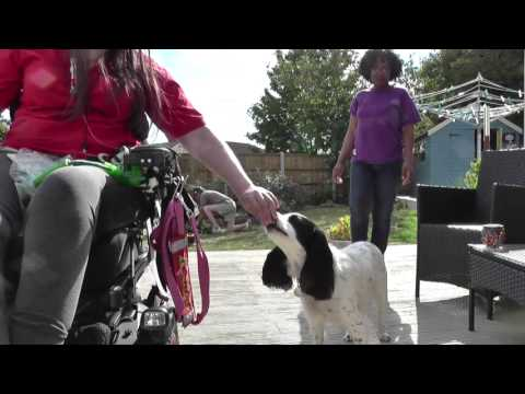 Do More With Your Dog - Advanced Trick Dog - Lucy & Molly
