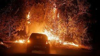 Şili'de 80 bin hektar ormanlık alan kül oldu