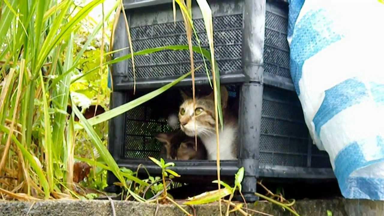 Cats love 可愛素食貓貓母子片段