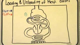 AP Biology Project Part Four
