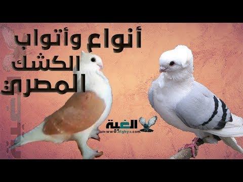 اتواب والوان الحمام الكشك المصري بالتفصيل الغية العمدة Youtube