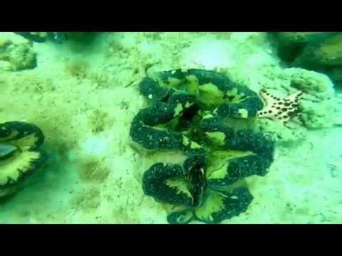 Giant Clams at Pearl Farm. August 2/5,2014