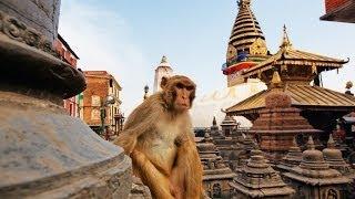 Swayambhunath: Kathmandu's Monkey Temple