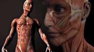 тело человека ( грани возможного )