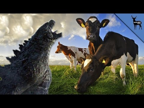 Does Radiation Turn Animals into Monsters? - YouTube