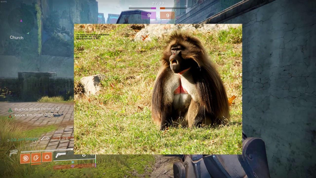 Monkey Madness Youtube