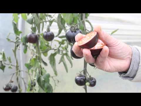These Jet Black Tomatoes May Look Weird but They're Great for Your Health