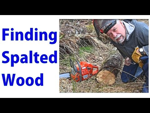 Finding Exotic Spalted Wood Lumber - a woodworkweb video