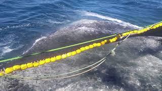 Altuncu Serkan Reis Moritanya yine sardin 200 ton