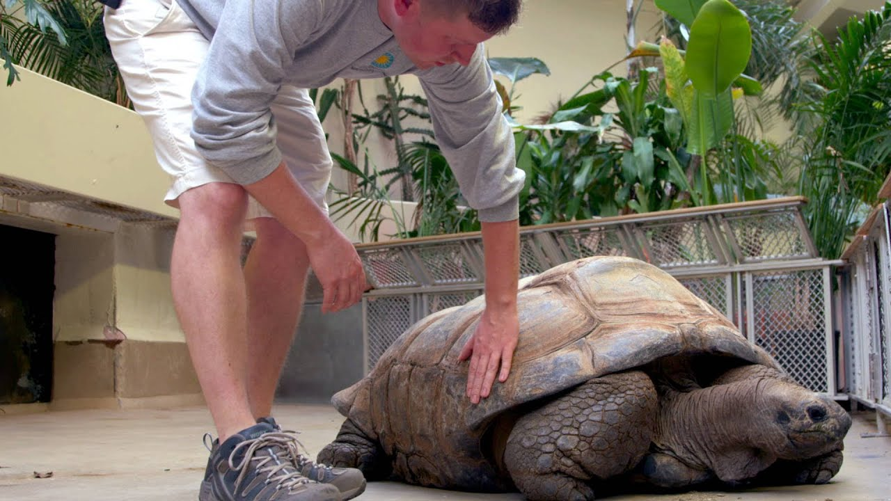 What Is A Tortoise Shell Made Of Youtube