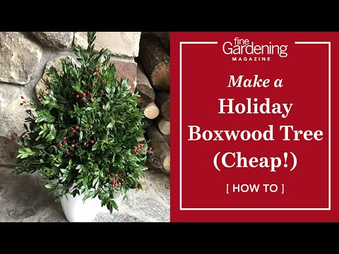 How to Make a Holiday Boxwood Tree (Cheap!)