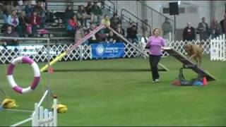 Dogue De Bordeaux First Competes At Akc National Agility Invitational 2009!