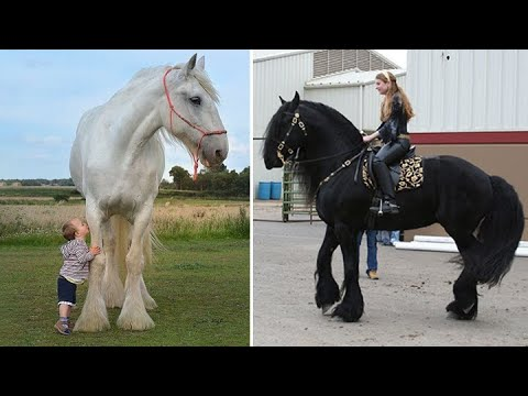 Cute And funny horse Videos Compilation cute moment of the horses - Cutest Horse #51