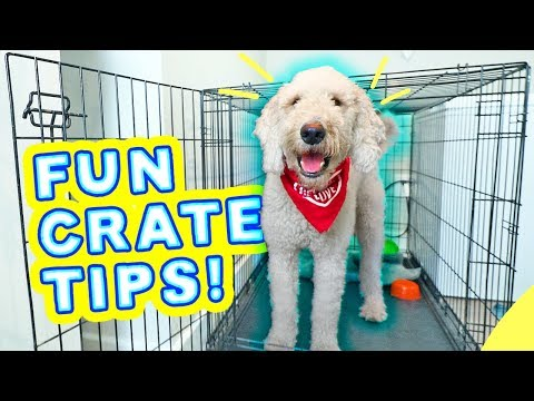 best-crate-training-games-for-puppies!-🐶-dog-scared-of-crate-tips!