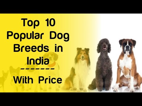 Top 10 Popular dog breeds in india