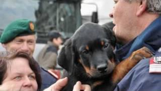 "Police Puppy ( ""luc"" 2010, Rottweiler)"