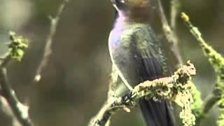 Самая быстрая птица по крыльям!!!!!!!!!!!!!!!!!!!