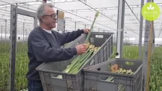 Mayesh Minute: Dutch Amaryllis Farm